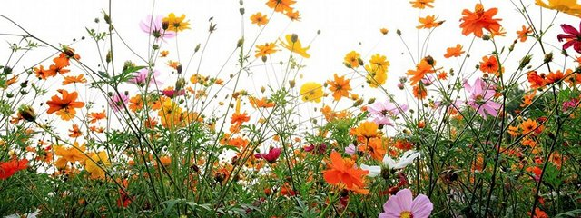 flowers multi_640x240